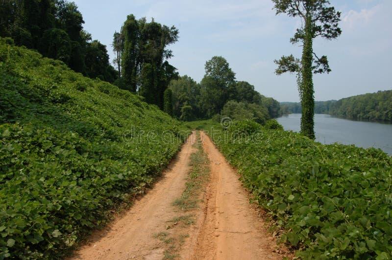 Download Along The Kudzu Path Stock Photography - Image: 6030502