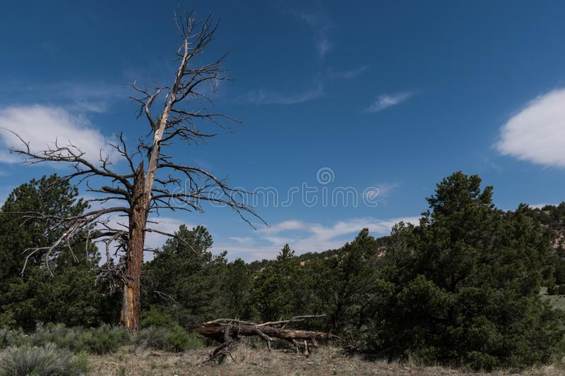 Along the Largo trail near Quemado lake, southwest N.M royalty free stock image