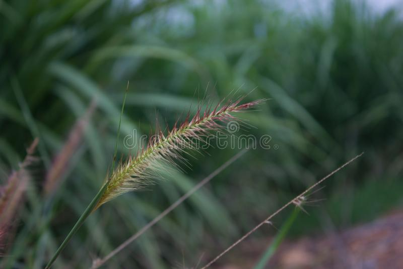 Grass. Along the way through it is still beautiful things to crave, try to drop and watch those things royalty free stock photos