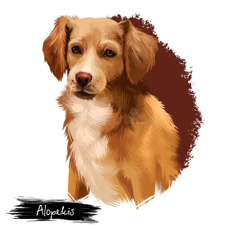 Alopekis breed digital art illustration isolated on white. Cute domestic purebred animal. Brown dog with white neck vector illustration