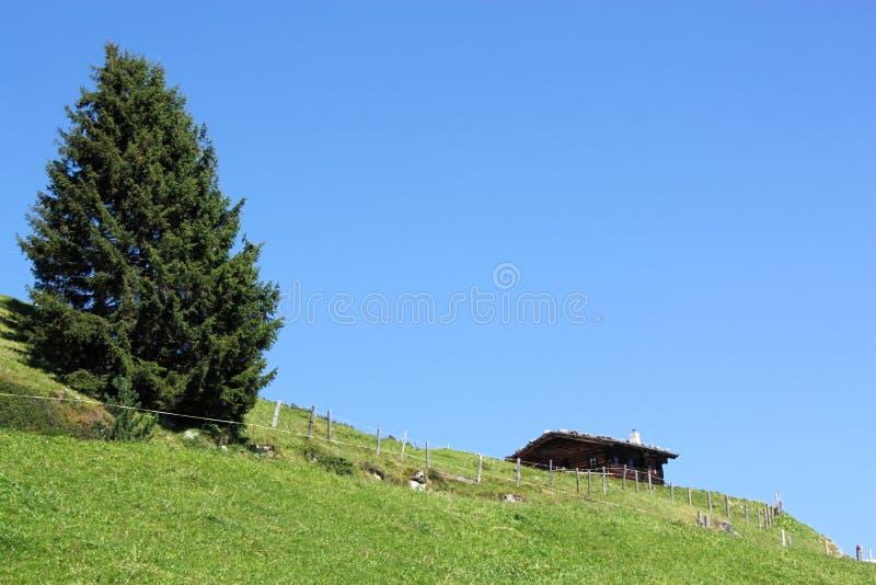 Download Alp cottage stock image. Image of alpine, nature, green - 26398921