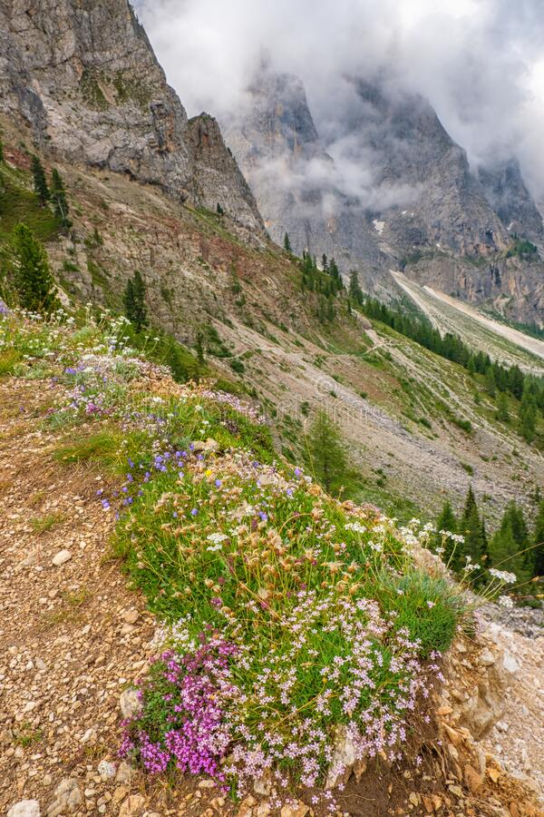 Alp flowers in a beautiful wild mountain landscape stock photos