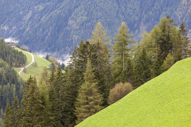 Download Alp Forest Landscape Stock Image - Image: 26507231
