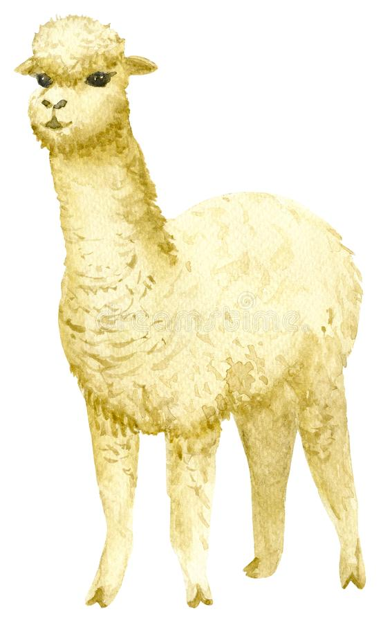 alpaca royalty-vrije illustratie