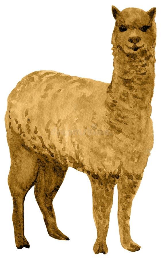 alpaca libre illustration