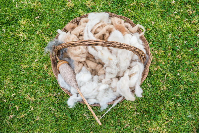 Alpaca wool peruvian Andes Cuzco Peru stock images