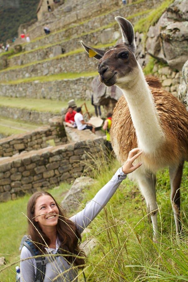 Alpaca y mujer fotos de archivo