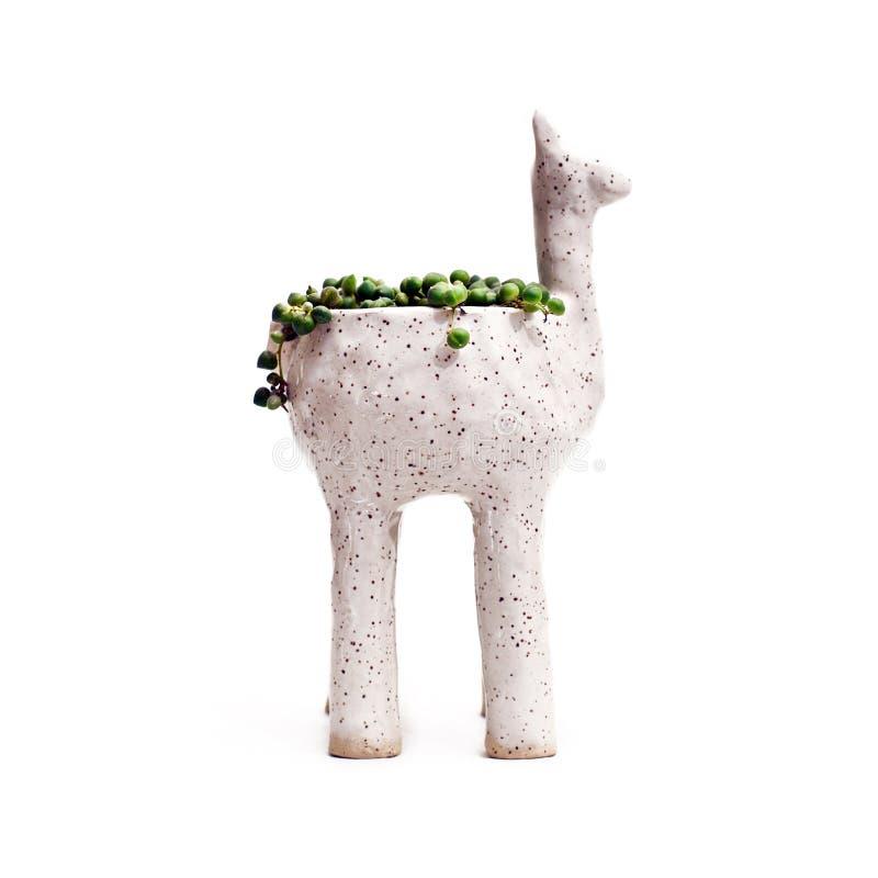 Alpacaplanter med rad av p?rlor royaltyfri bild
