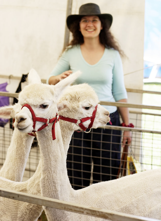 Alpacas and country girl stock photos