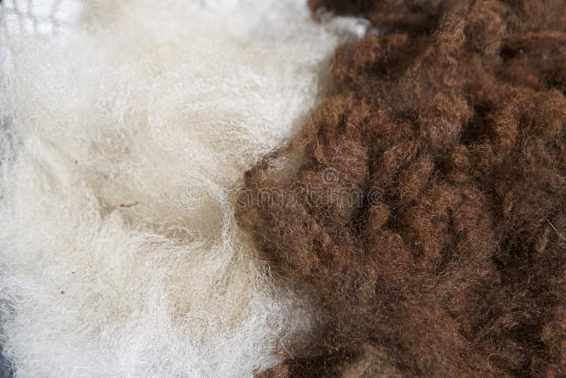 Alpacawol in Ruw royalty-vrije stock foto's
