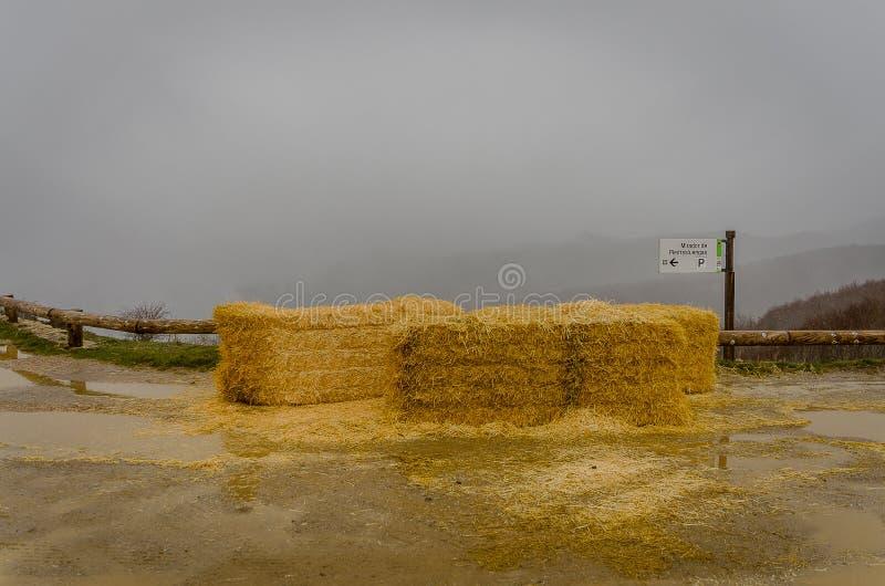 Alpaga de paille dans le point de vue de Piedrasluengas Palencia photographie stock libre de droits