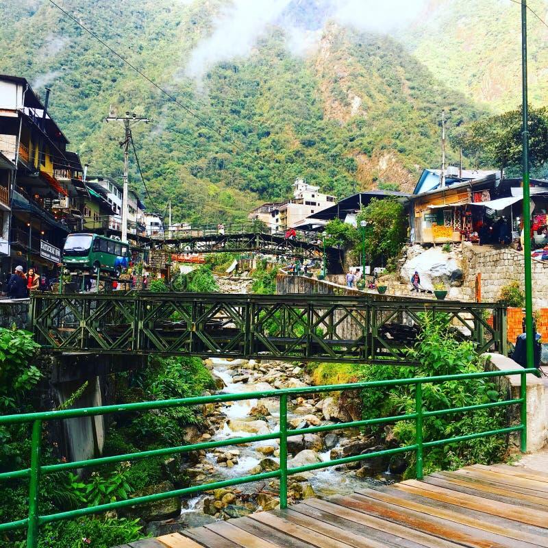 Alpaka in Machu Picchu stockfotos