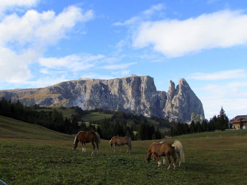 Alpe di Siusi Fjälläng hästar och sciliar arkivfoton