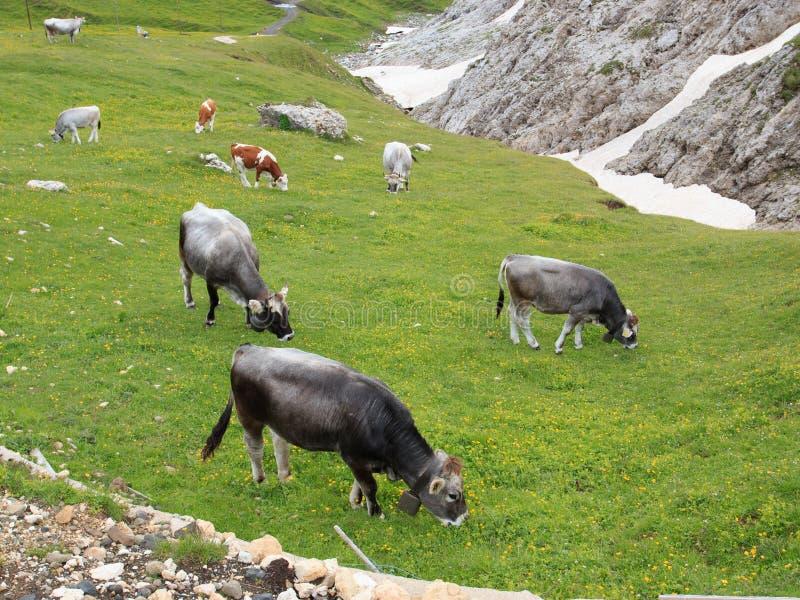 Alpe di Siusi royalty free stock image