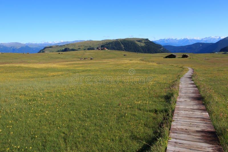 Alpe di Siusi royalty free stock photography