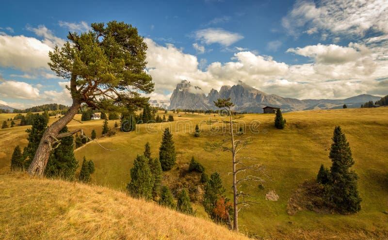 Alpe di Siusi - Seiser Alm med den Sassolungo - Langkofel och Sassopiatto berggruppen i bakgrund arkivfoto