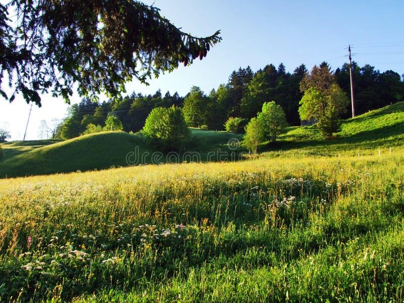 Alpejscy paśniki i łąki na skłonach Churfirsten pasmo górskie fotografia royalty free