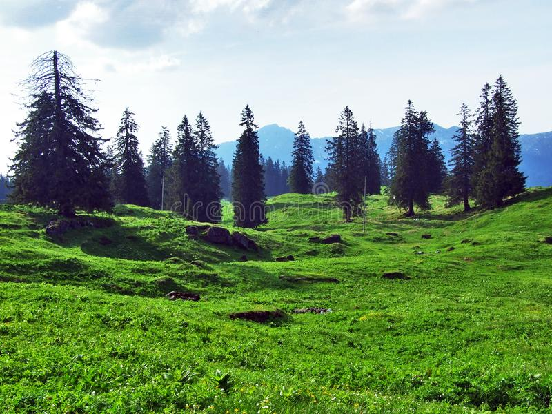 Alpejscy paśniki i łąki na skłonach Churfirsten pasmo górskie obrazy royalty free
