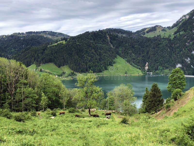 Alpejscy paśniki i obszary trawiaści w dolinie wysokogórskim Jeziornym Wagitalersee Waegitalersee i Wagital lub Waegital, Innerth fotografia stock