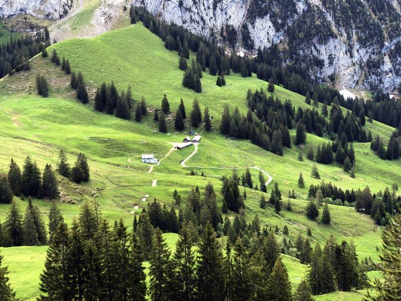 Alpejscy paśniki i obszary trawiaści w dolinie wysokogórskim Jeziornym Wagitalersee Waegitalersee i Wagital lub Waegital, Innerth zdjęcie royalty free