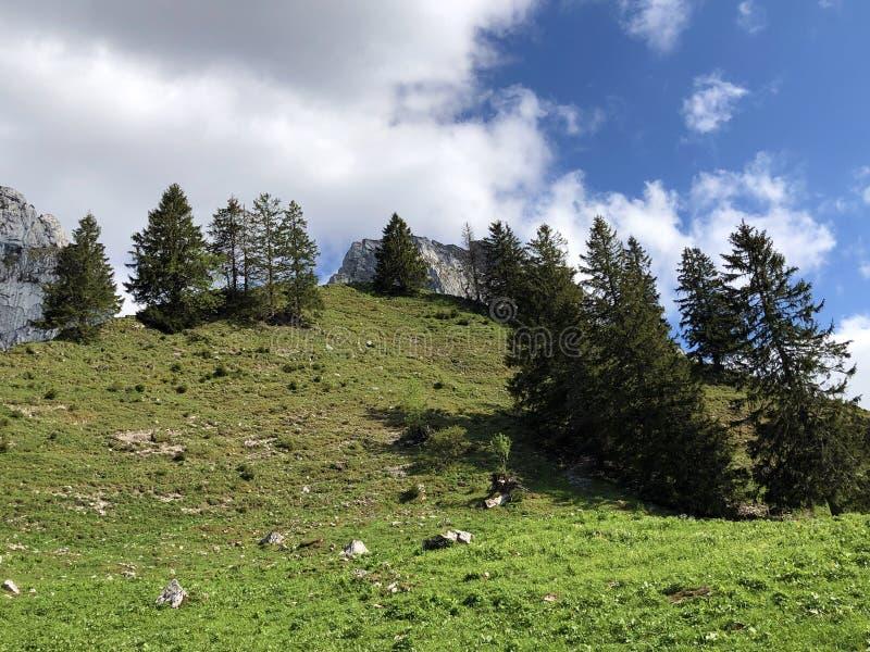 Alpejscy paśniki i obszary trawiaści w dolinie wysokogórskim Jeziornym Wagitalersee Waegitalersee i Wagital lub Waegital, Innerth fotografia royalty free