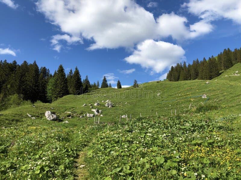 Alpejscy paśniki i obszary trawiaści w dolinie wysokogórskim Jeziornym Wagitalersee Waegitalersee i Wagital lub Waegital, Innerth obraz stock