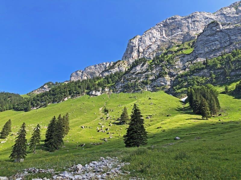 Alpejscy pa?niki i ??ki w Apenzellerland regionie i w Schwendebach dekatyzuj? dolin? fotografia royalty free