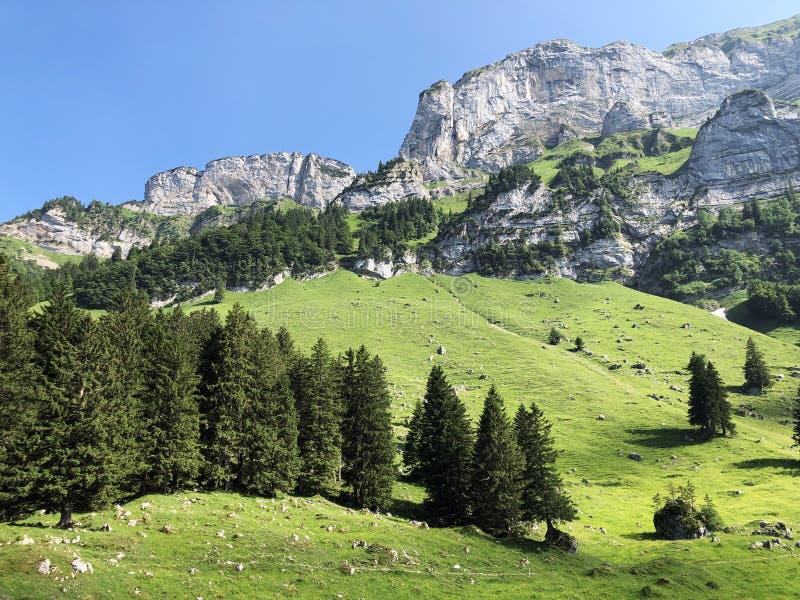 Alpejscy pa?niki i ??ki w Apenzellerland regionie i w Schwendebach dekatyzuj? dolin? obraz royalty free