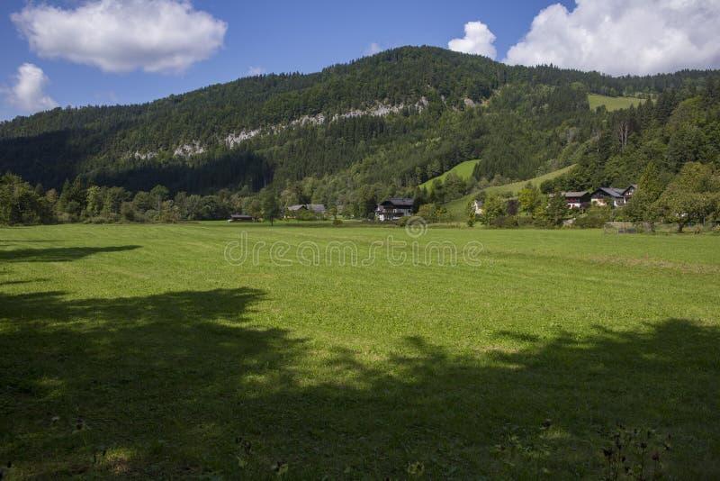 Alpejska łąka na słonecznego dnia Lunzer niedalekim jeziorze Austria zdjęcie royalty free