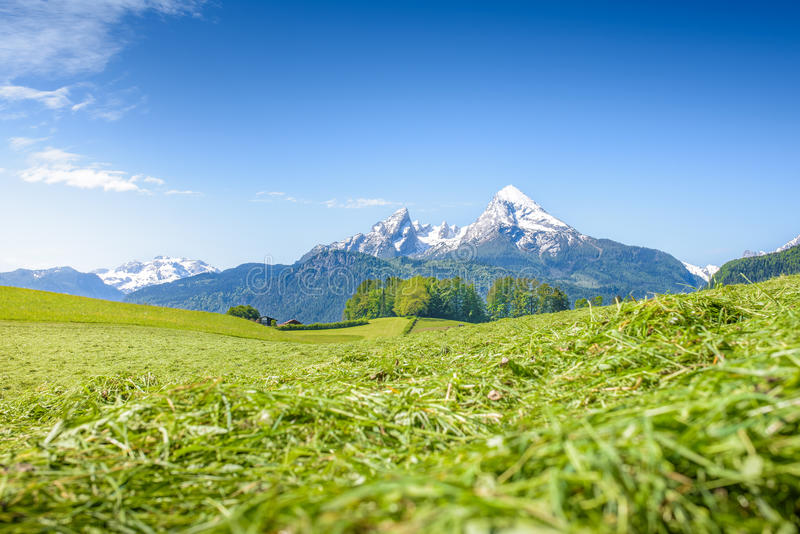 Alpejska łąka z śnieżnym Watzmann obrazy stock