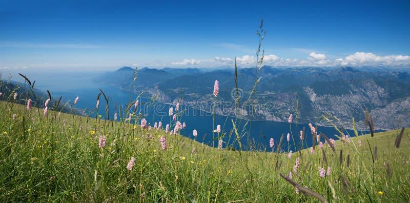 Alpejska kwiat łąka przy monte baldo górą obrazy royalty free