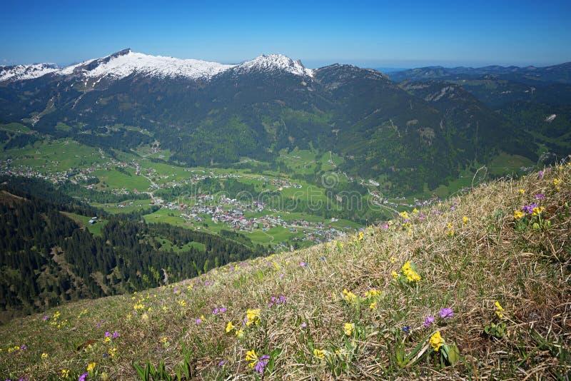 Alpejska kwiat łąka, widok kleinwalsertal i, Austria fotografia royalty free