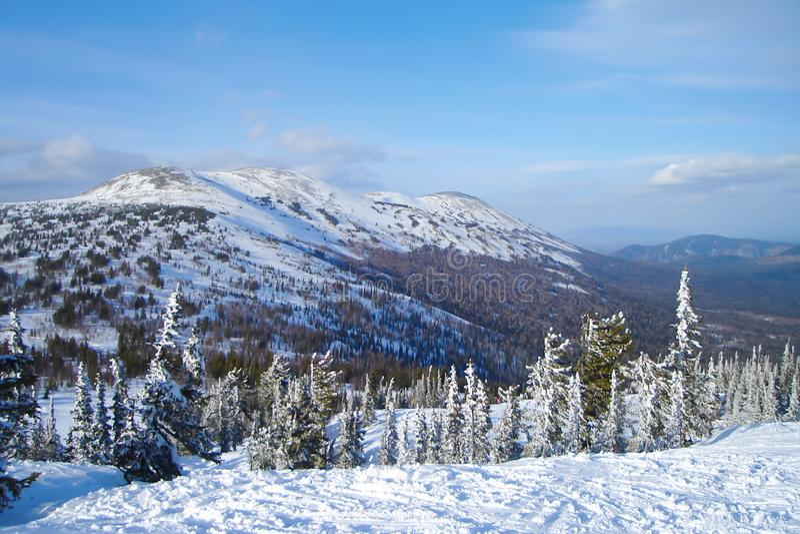 Alpejski krajobraz z śnieżystymi świerkowymi drzewami zdjęcia stock