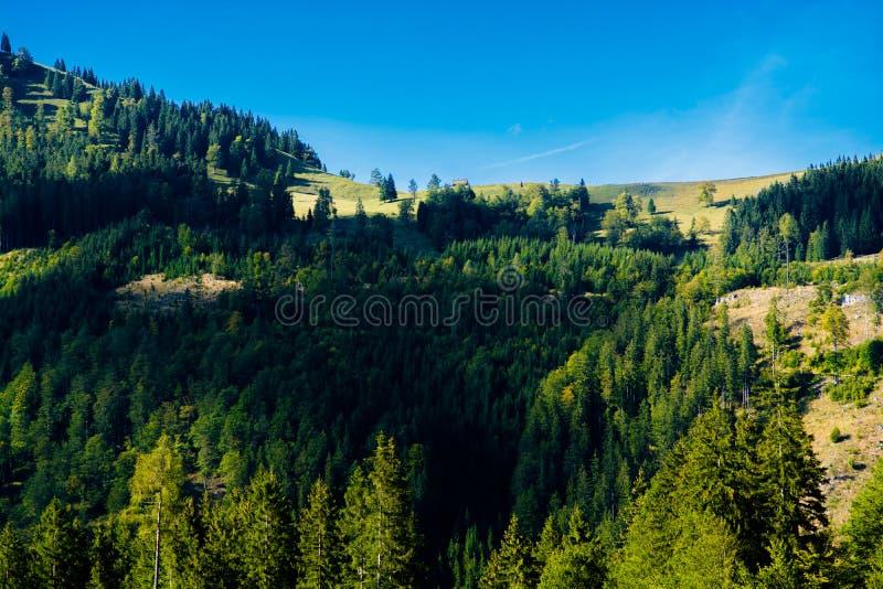 Alpejski krajobraz z górami i lasami w Austria obraz stock