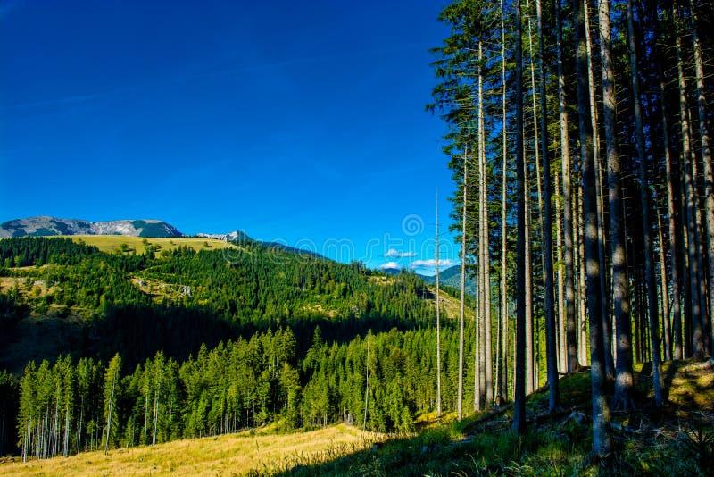 Alpejski krajobraz z górami i lasami w Austria zdjęcia stock
