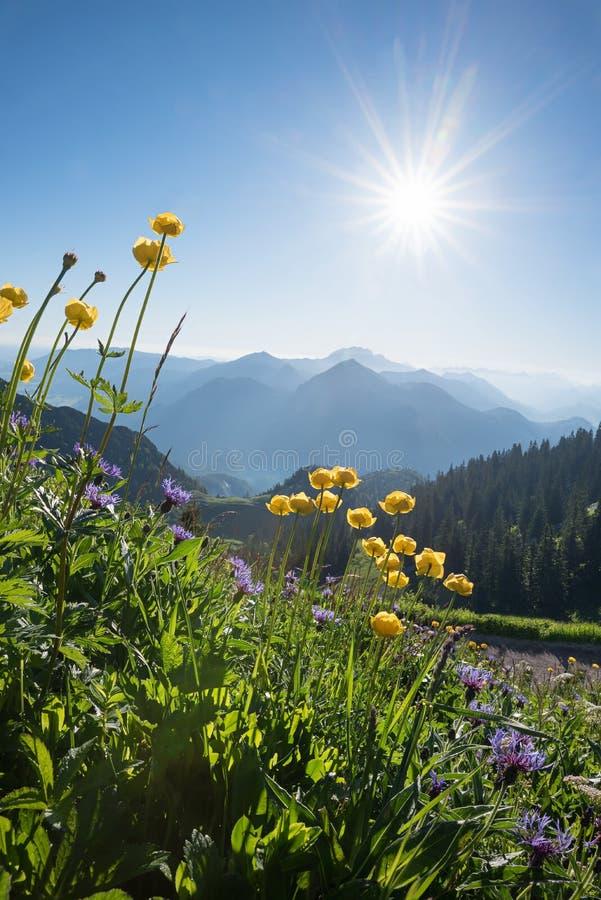 Alpejski krajobraz z kula ziemska kwiatami i gwożdżącym rampion fotografia royalty free