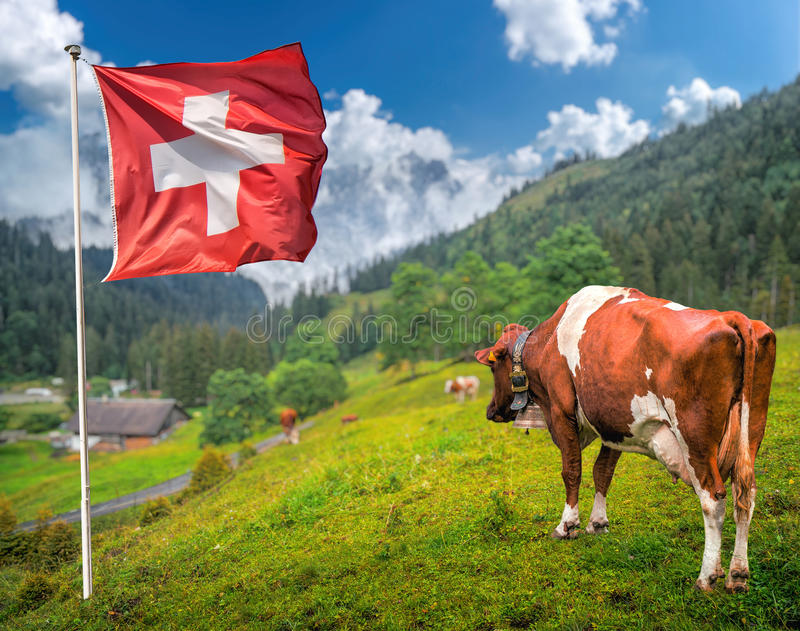 Alpejski krajobraz z pastwiskowymi krowami i imponująco halnymi wierzchołkami zdjęcia stock