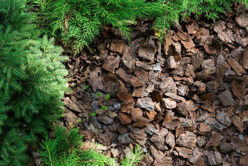 Alpejski wzgórze conifers i krzaki mulched z barkentyną zdjęcie stock