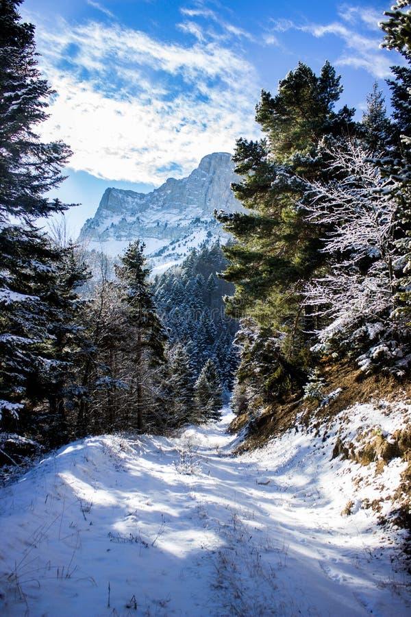 Alpejski zima dzień zdjęcie royalty free