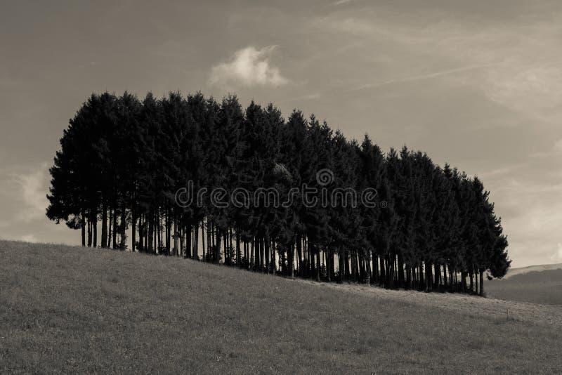 Alpejskie łąki i sosny odizolowywający fotografia stock