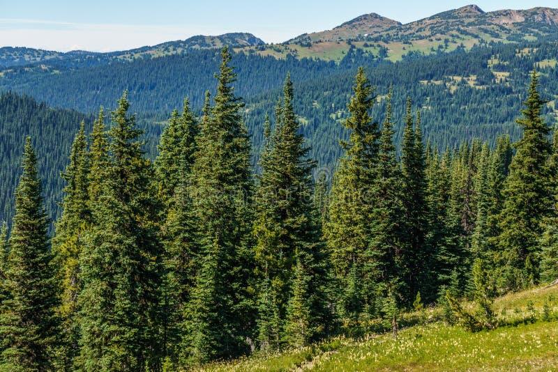 Alpejskie śródpolne świeże zielone łąki, kwitnienie kwiaty i lasowej zieleni góry wierzchołki w tle zdjęcie stock