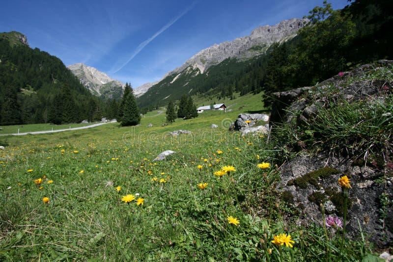 Alpen royalty-vrije stock fotografie