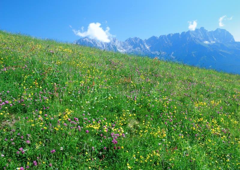 Alpenweide lizenzfreie stockfotos