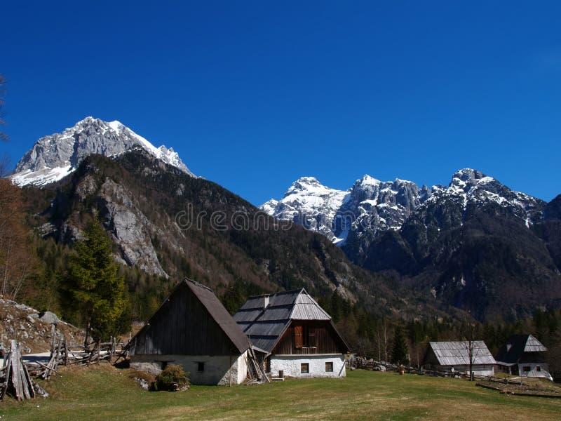 Alpenwiese u. Berge stockfoto