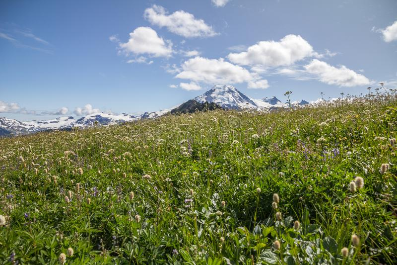 Alpenwiesen, Mt Bäcker und flaumige weiße Wolken, Nordkaskaden stockbilder