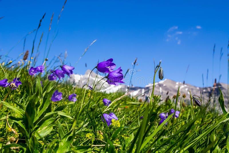 Alpes royaltyfri fotografi