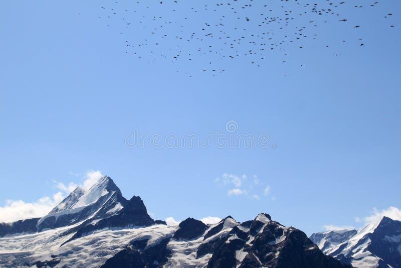 Alpes suíços: picos e pássaros de vôo snow-covered fotografia de stock