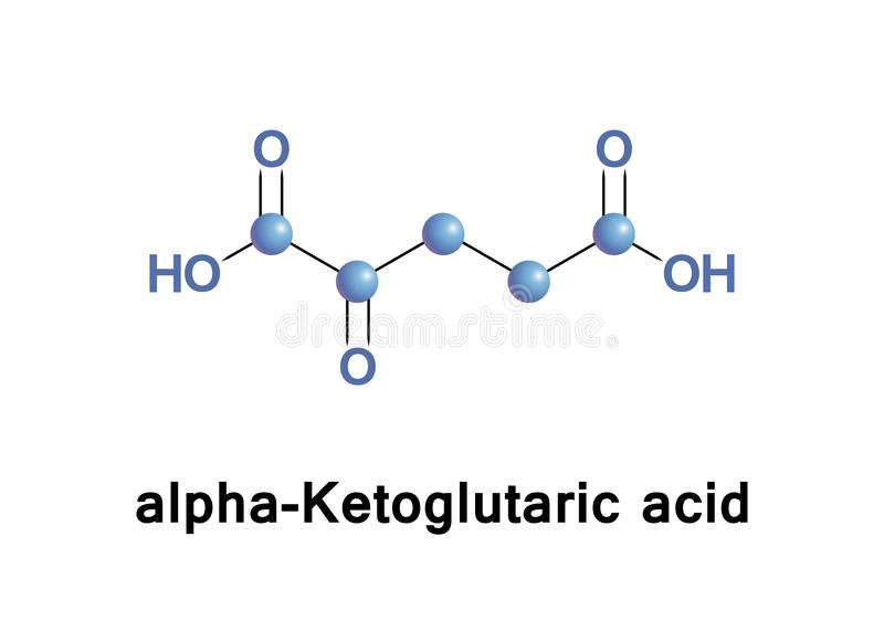 Alpha-Ketoglutaric acid. Is one of two ketone derivatives of glutaric acid. It is the keto acid produced by deamination of glutamate, and is an intermediate in stock illustration