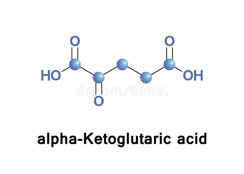 Alpha-Ketoglutaric zuur stock illustratie