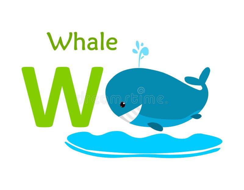 alphabet animal letter w W för val royaltyfri illustrationer